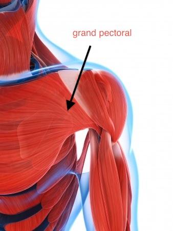 rupture du grand pectoral