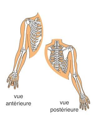 Chirurgie du coude et de la main